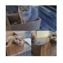 Коробка для кота с этикеткой и веревкой